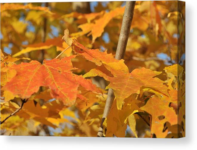 Leaves Canvas Print featuring the photograph Yellow Foliage by Michael Jalbert