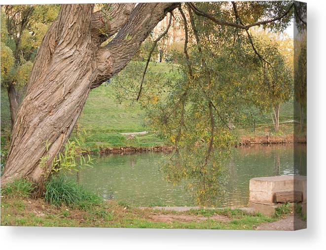 Park Canvas Print featuring the photograph Landscape by Victor Filinkov
