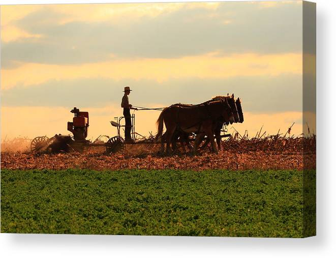 Amish Canvas Print featuring the photograph Amish Farmer by Lou Ford