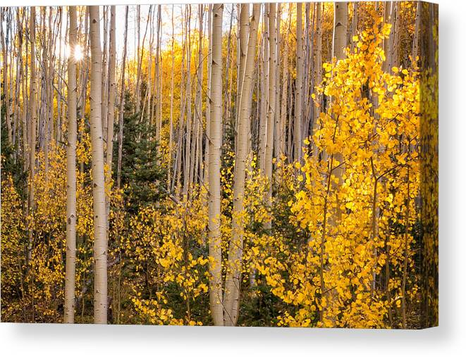 Aspen Canvas Print featuring the photograph Aspens In Autumn 10 - Santa Fe National Forest New Mexico by Brian Harig