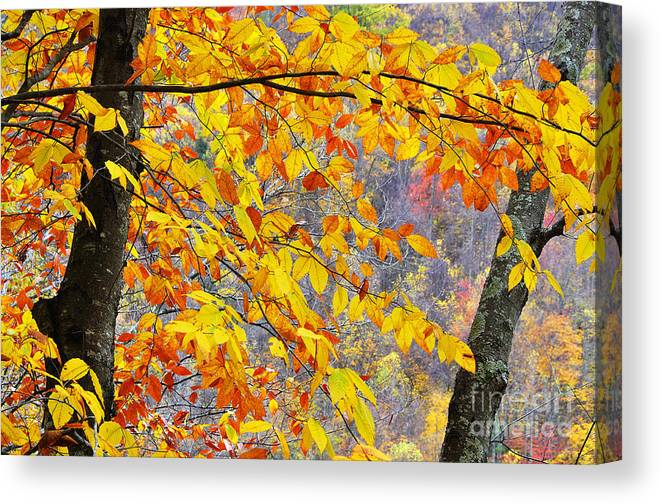 Autumn Canvas Print featuring the photograph Autumn Beech Leaves by Thomas R Fletcher
