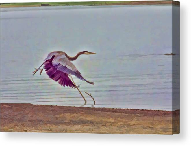 Blue Heron Canvas Print featuring the photograph Blue Heron by Douglas Barnard