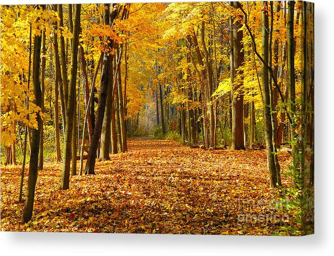 Foliage Canvas Print featuring the photograph Golden Days by Neil Doren