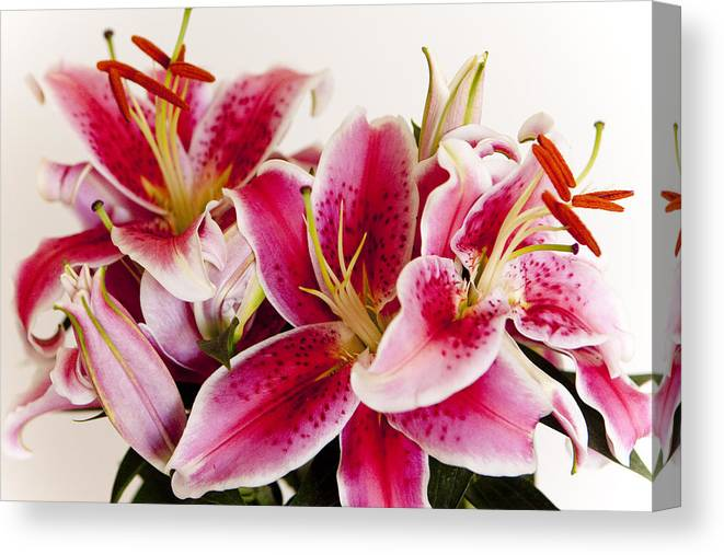 Flora Canvas Print featuring the photograph Graceful Lily Series 11 by Olga Smith