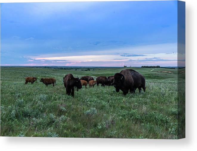 Jay Stockhaus Canvas Print featuring the photograph Home On The Range by Jay Stockhaus