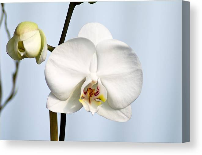 Floral Canvas Print featuring the photograph Orchid by John Ater