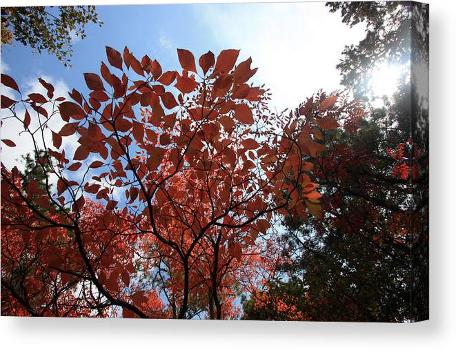 Trees Canvas Print featuring the photograph Reaching For The Sun by Mary Haber
