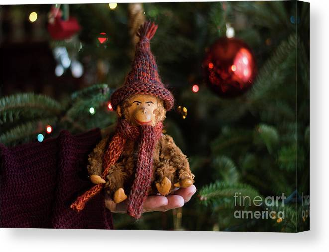 Monkey Canvas Print featuring the photograph Silly Old Monkey Toy In A Child Hands Under The Christmas Tree by Andrea Varga