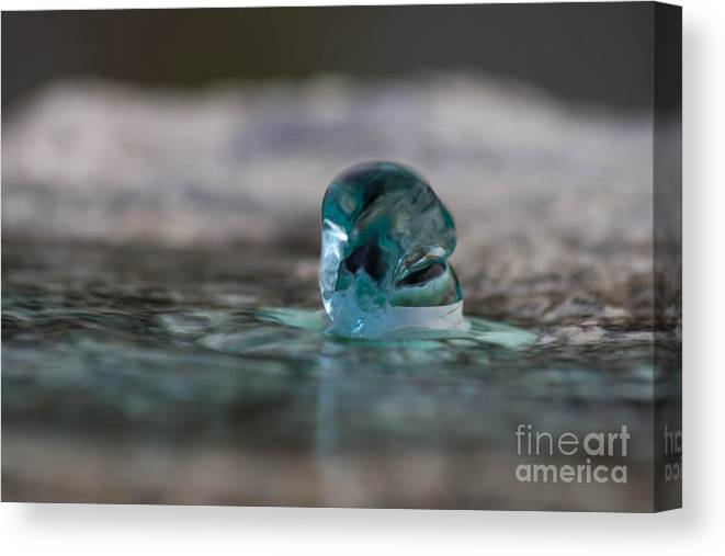 Water Canvas Print featuring the photograph Spring by Marta Grabska