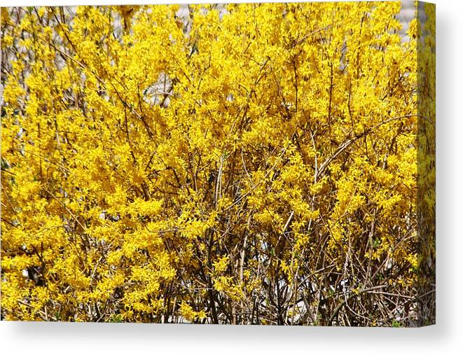 Tree Canvas Print featuring the photograph Summer Is Near by Paul SEQUENCE Ferguson       sequence dot net