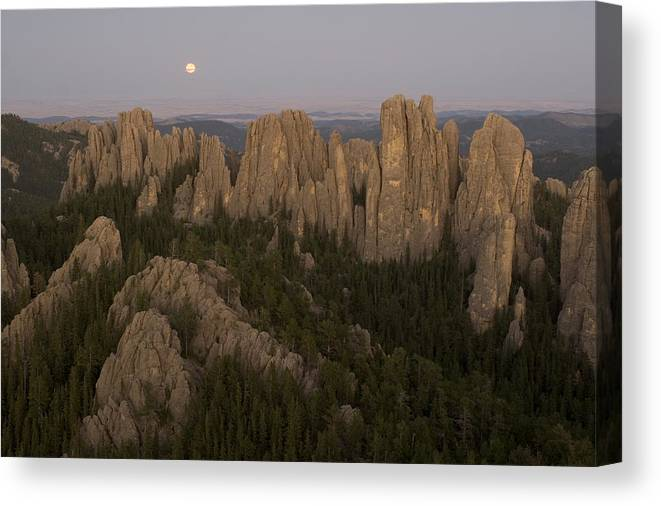 Nobody Canvas Print featuring the photograph The Needles Protrude From Forests by Phil Schermeister
