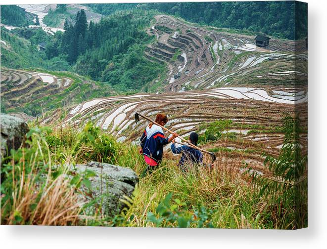 Terrace Canvas Print featuring the photograph Longji Terraced Fields Scenery by Carl Ning