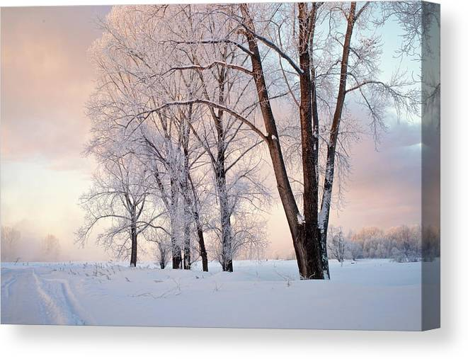 Amazing Canvas Print featuring the photograph Amazing Landscape With Frozen Snow Covered Trees At Sunrise  by Oleg Yermolov