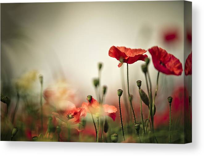 Poppy Canvas Print featuring the photograph Poppy Meadow by Nailia Schwarz