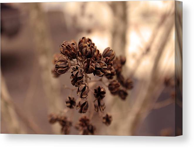 Seed Pods Canvas Print featuring the photograph Pods by Evelyn Patrick