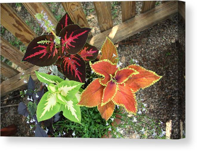 Plants Canvas Print featuring the photograph 3 Flowers by Christopher Blake