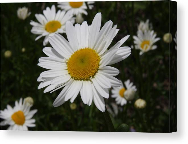 Object Canvas Print featuring the photograph Flowers by Luke Robertson