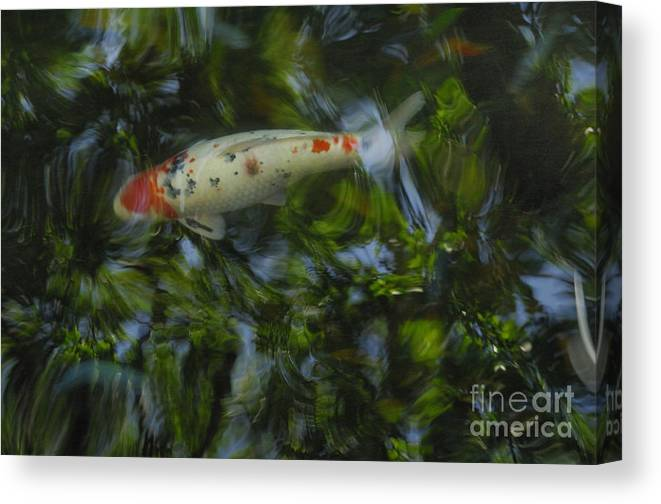 Koi Canvas Print featuring the photograph The Koi Pond by Marc Bittan