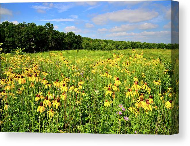 Mchenry County Canvas Print featuring the photograph Marengo Ridge Wildflowers by Ray Mathis