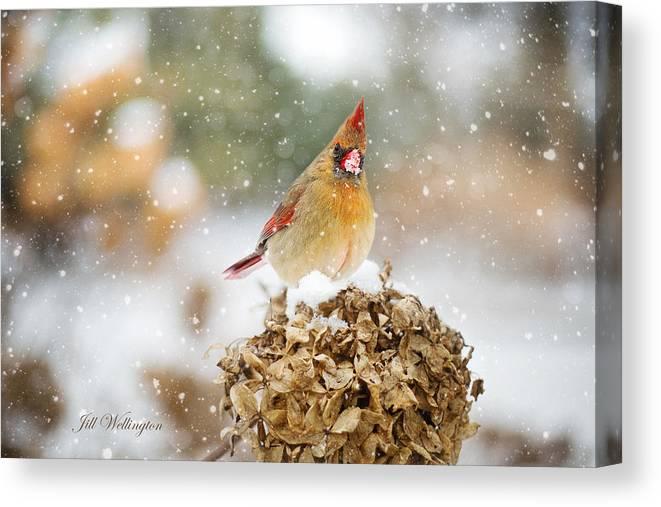 Female Cardinal Canvas Print featuring the digital art Winter Birds by Jill Wellington