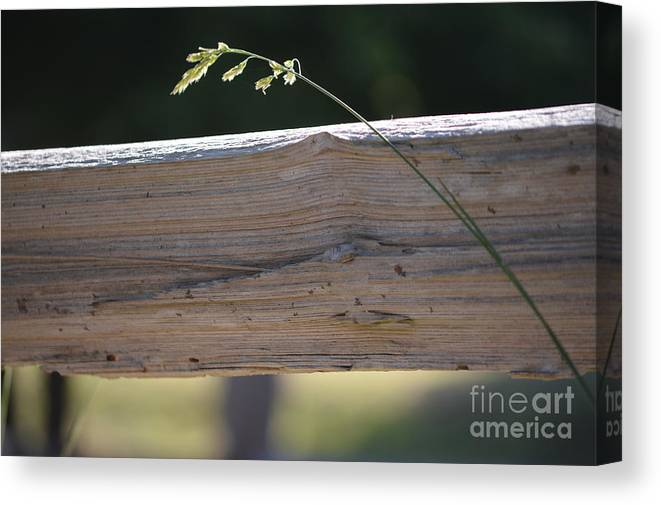 Grass Canvas Print featuring the photograph Untitled by Laurie Runyan