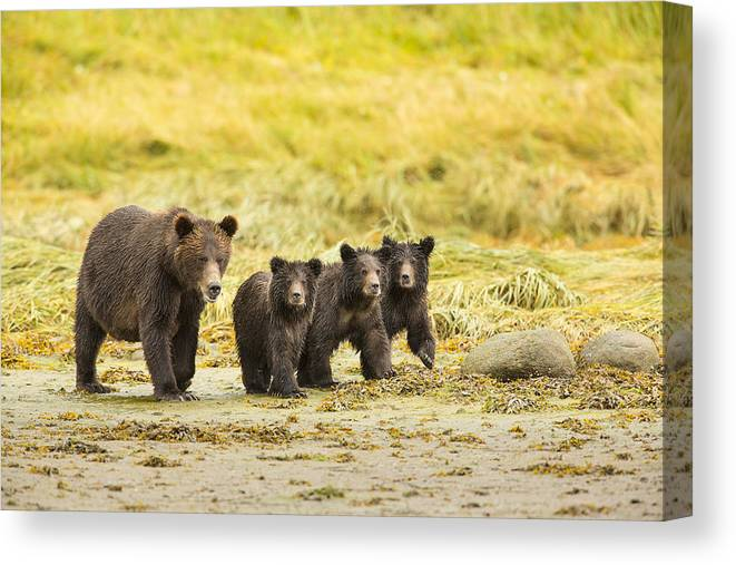 Adult Canvas Print featuring the photograph A Large Family by Tim Grams