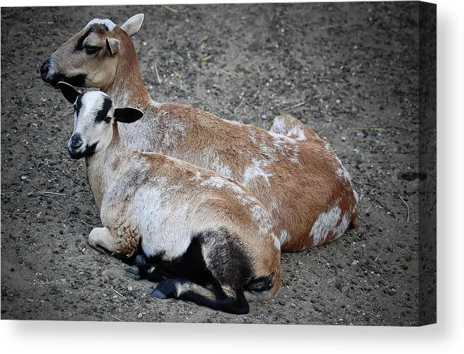 Goats Canvas Print featuring the photograph A Nanny And Her Kid by DigiArt Diaries by Vicky B Fuller
