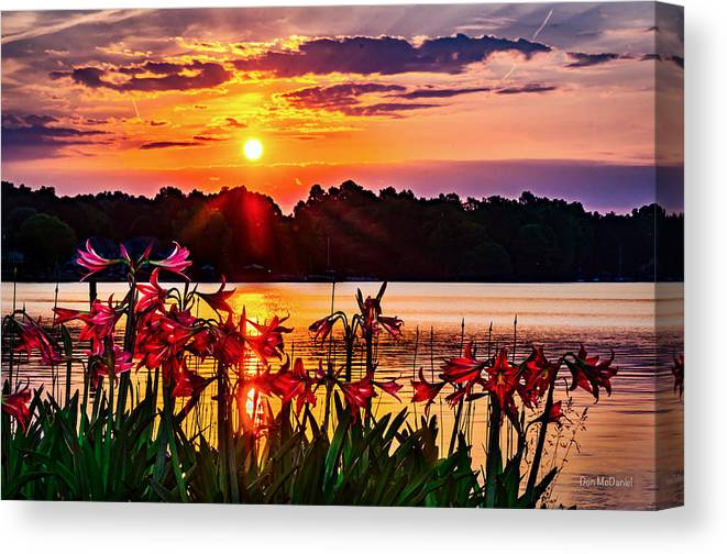 Amarylis Canvas Print featuring the photograph Amaryllis At Sunrise Over Lake by Don McDaniel