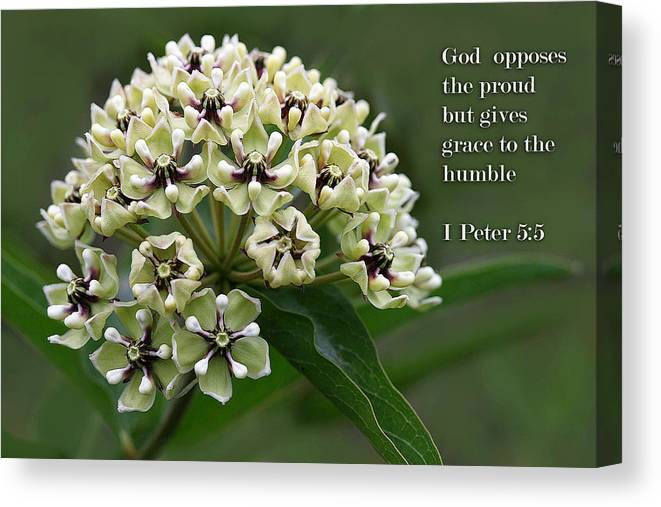 Scripture Canvas Print featuring the photograph Antelope Horns Wildflower With Scripture by Linda Phelps
