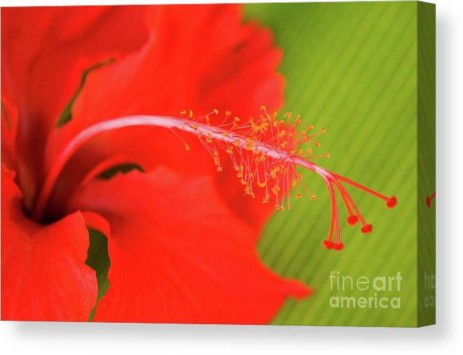 Nature Canvas Print featuring the photograph Aphrodisiac by Julia Hiebaum