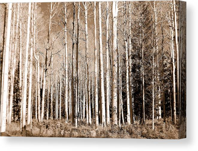 Aspens Canvas Print featuring the photograph Aspens by Heather S Huston