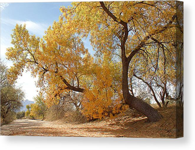 Autumn Canvas Print featuring the photograph Autumn In Cdo Wash by Greg Taylor