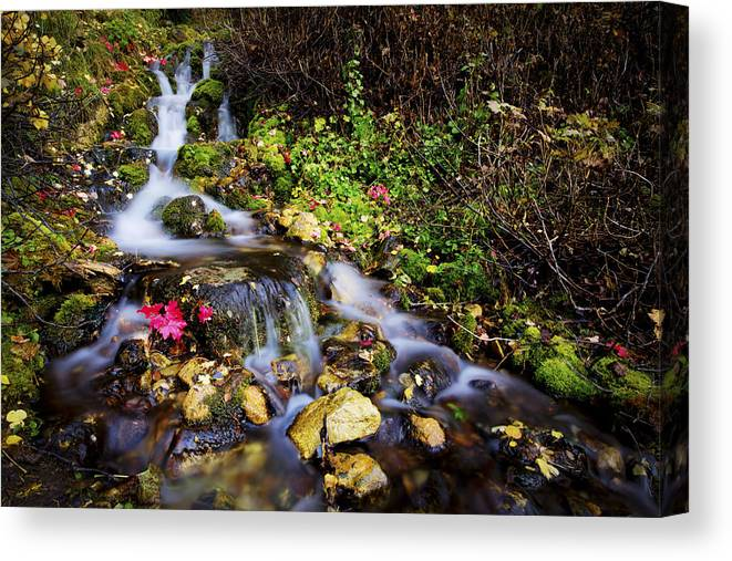 Nature Canvas Print featuring the photograph Autumn Stream by Chad Dutson