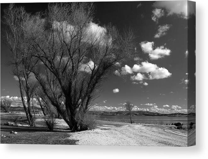 Folsom Canvas Print featuring the photograph Beach Tree by Dave Perks