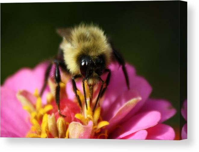 Bee Canvas Print featuring the photograph Bee Good by Annie Babineau