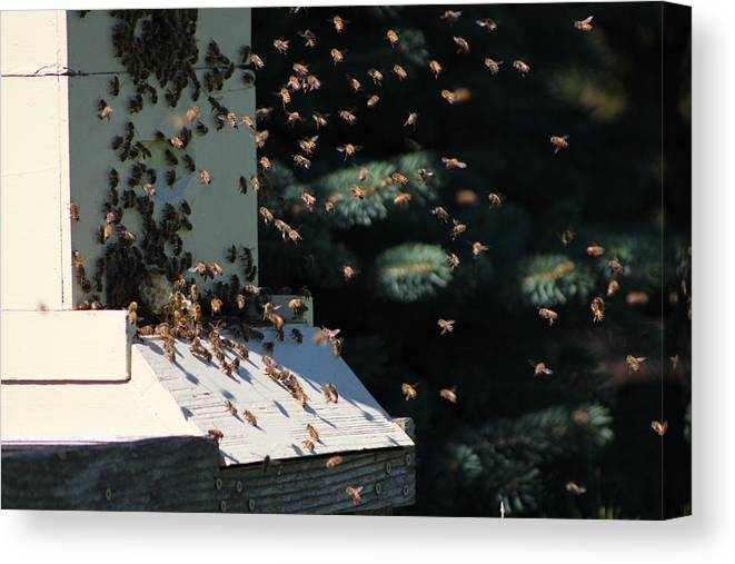 Bee Keepers Hive Chicago Botanical Gardens Canvas Print