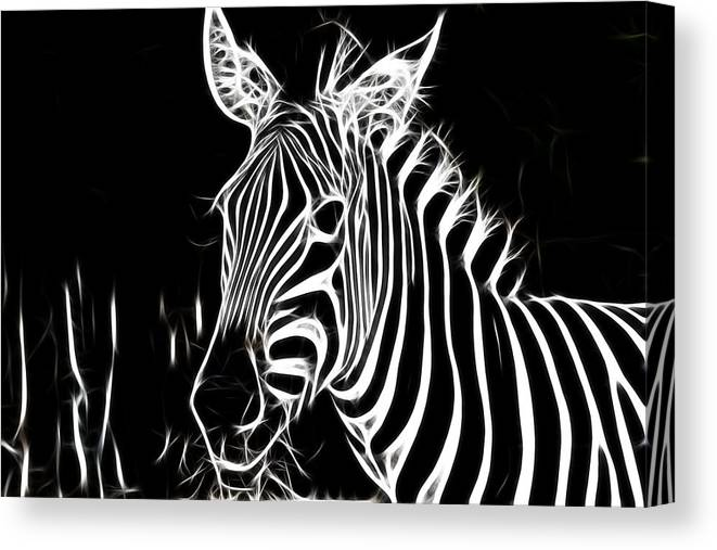 Zebra Canvas Print featuring the photograph Black And White by Douglas Barnard