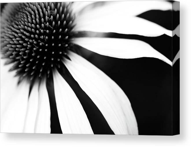 Black and white flower canvas prints fine art america mightylinksfo