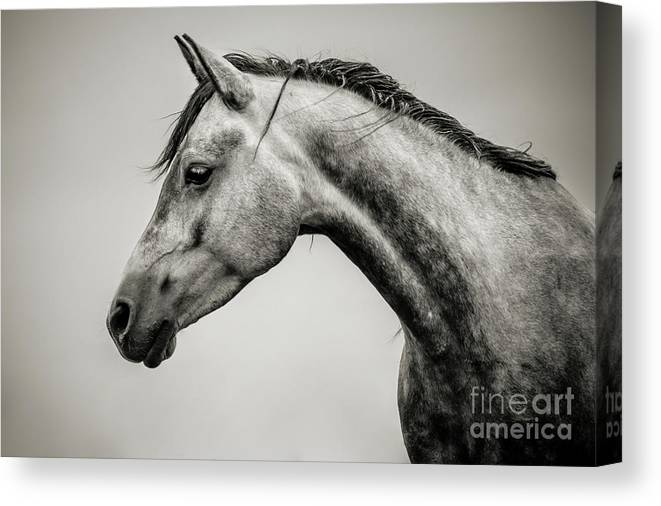 d8afc4477d5 Horse Canvas Print featuring the photograph Black And White Horse Head by Dimitar  Hristov
