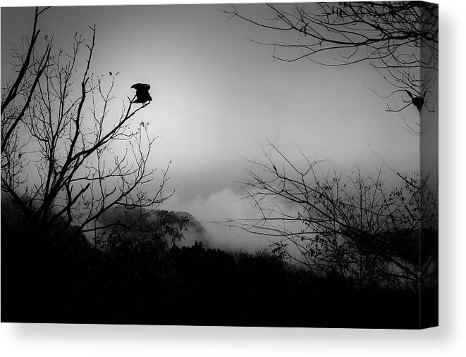 Black Canvas Print featuring the photograph Black Buzzard 8 by Teresa Mucha