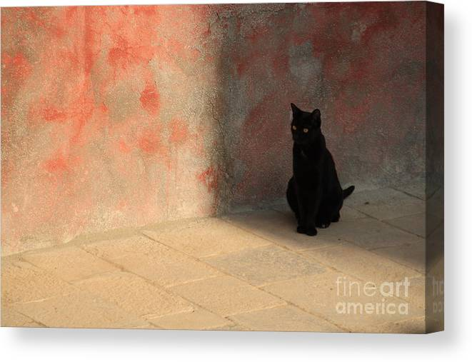 Cats Canvas Print featuring the photograph Black Cat On Burano by Michael Henderson