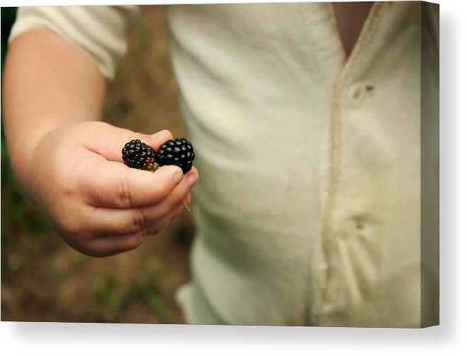Blackberry Canvas Print featuring the photograph Blackberry Baby by Meaghan Jacklitch