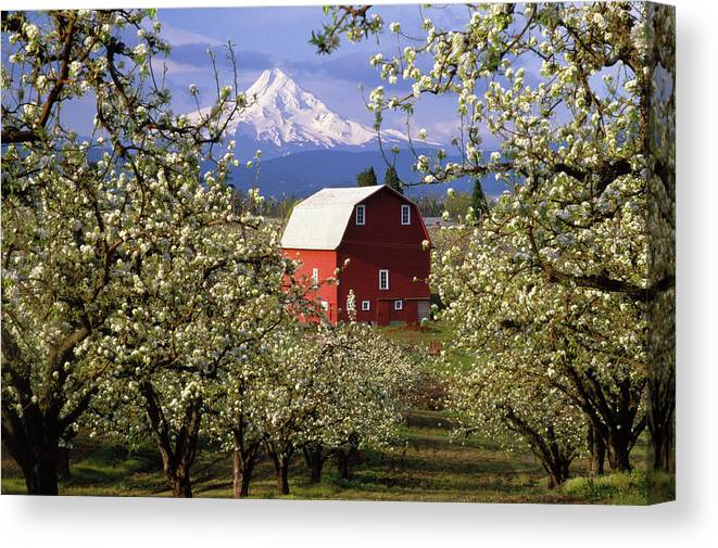 Barn Canvas Print featuring the photograph Blossom Time by Eggers Photography