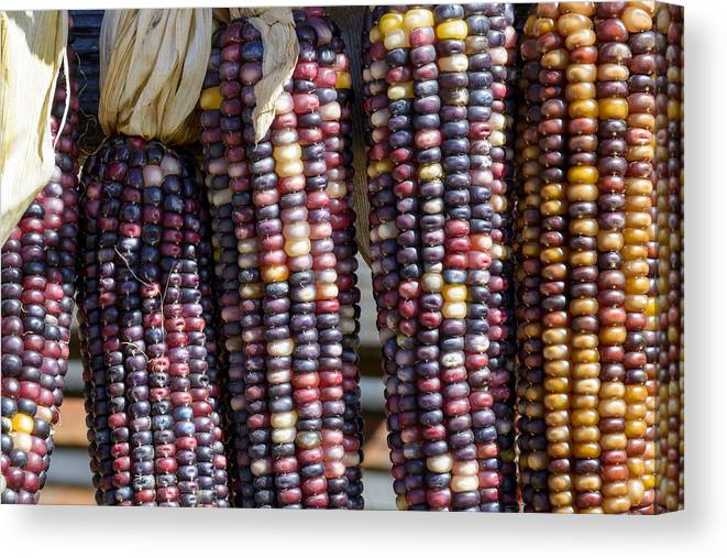 Art Canvas Print featuring the photograph Blue Indian Corn by Barry Cruver