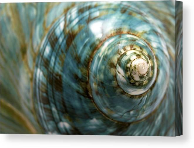 Macro Canvas Print featuring the photograph Blue Seashell by Fabrizio Troiani