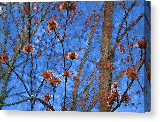 Blue Canvas Print featuring the photograph Budding Maples by Tom Reynen