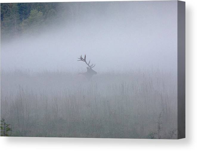 Elk Canvas Print featuring the photograph Bull Elk In Fog - September 30, 2016 by D K Wall