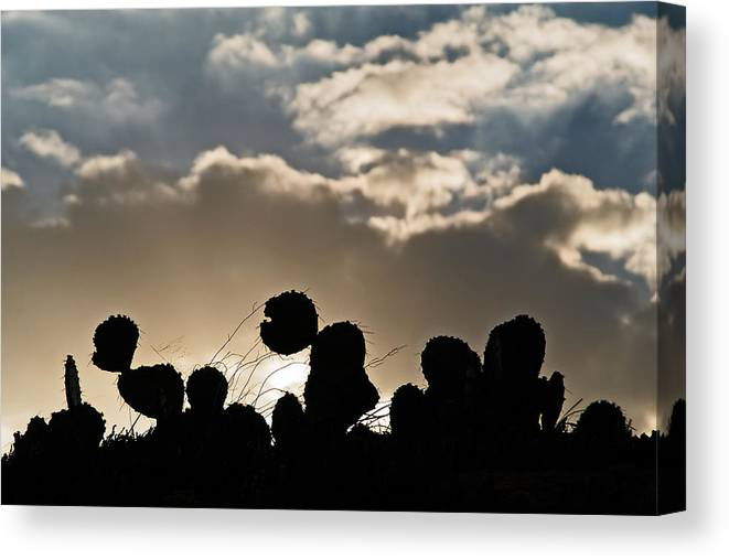 Cactus Canvas Print featuring the photograph Cactus Sunset by Karl Manteuffel