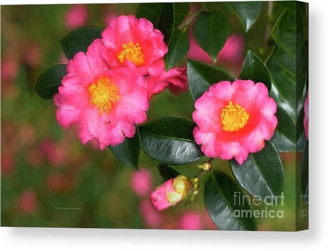 Camellia Canvas Print featuring the painting Camellia Pink by Deborah Benoit
