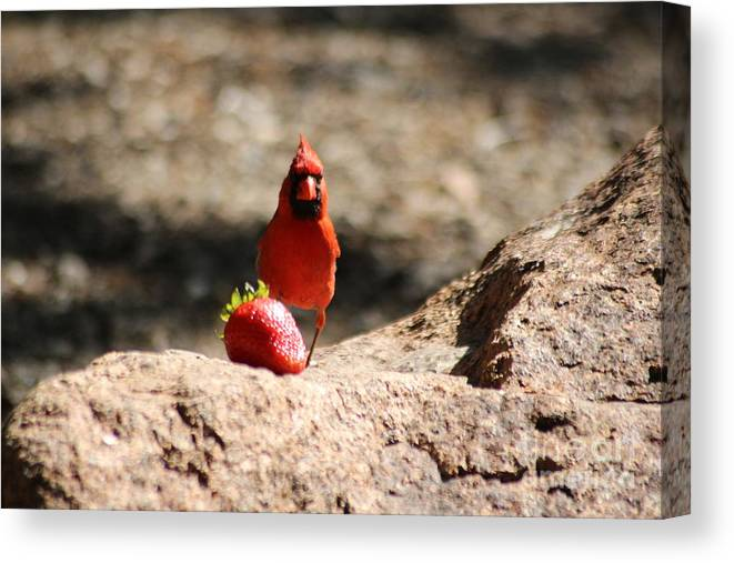 Cardinal Canvas Print featuring the photograph Cardinal Rule by Mike Parker